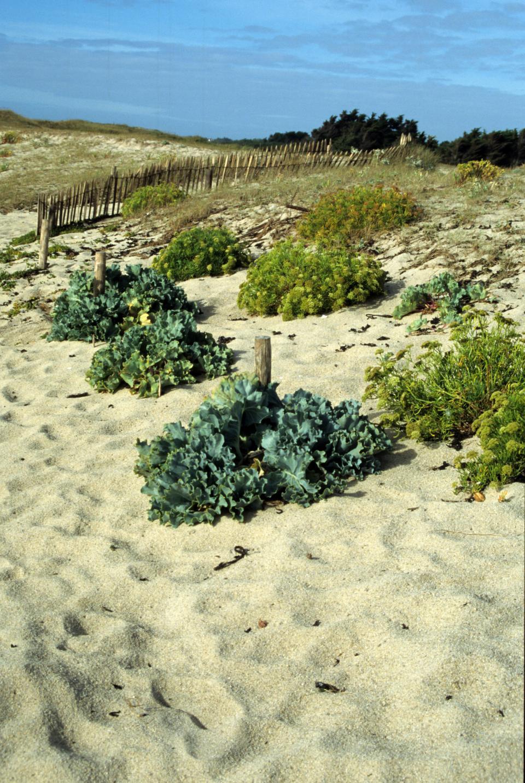 chou-marin-dune