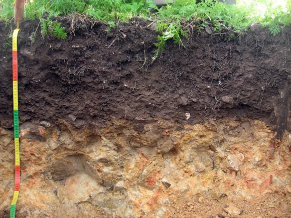 La matière organique du sol est reconnaissable à sa couleur sombre