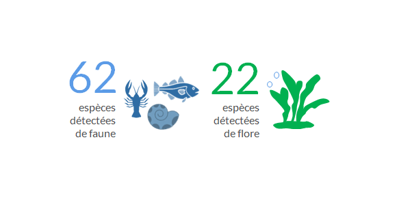 Espèces-marines-introduites-dans-les-eaux-bretonnes.png