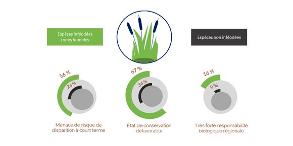 Etat-de-santé-des-espèces-inféodées-aux-milieux-zones-humides-en-Bretagne.png