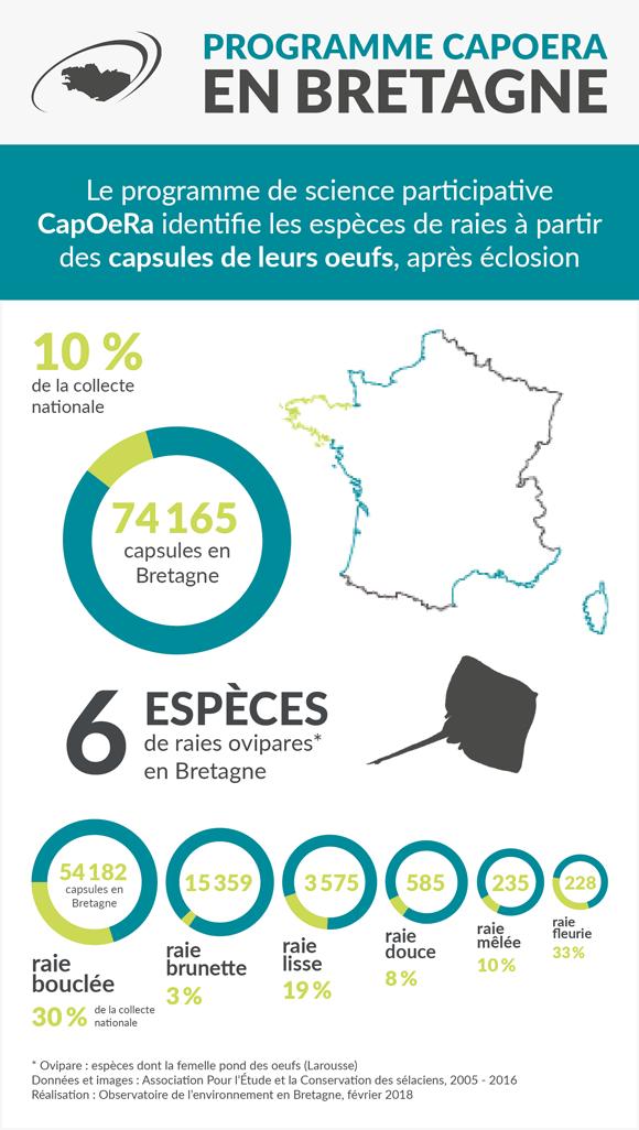 especes-raies-bretagne-infographie