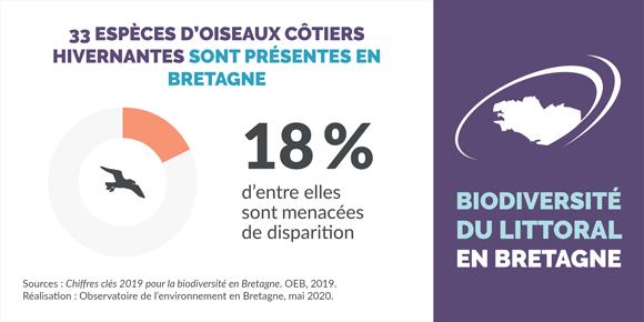 oiseaux-cotiers-hivernants-bretagne-infographie