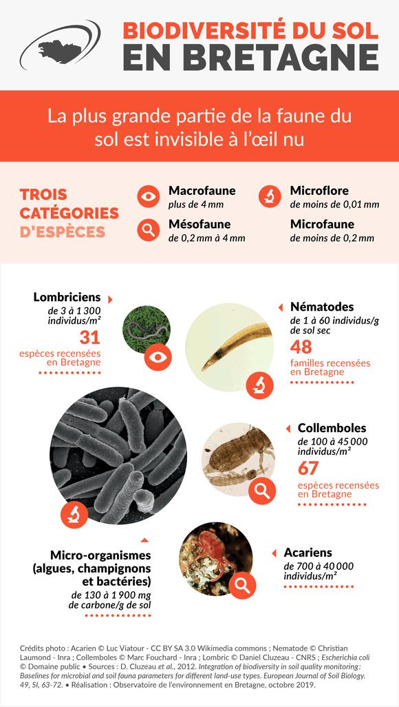 Biodiversité du sol