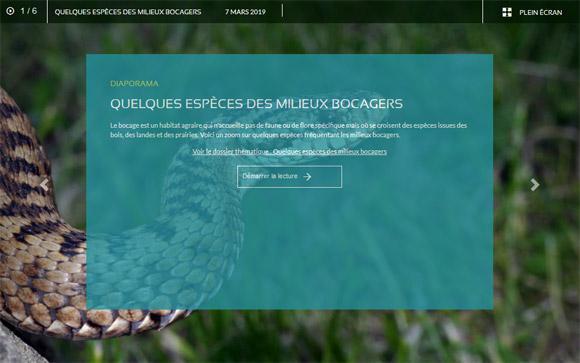 Diaporama : Quelques espèces des milieux bocagers