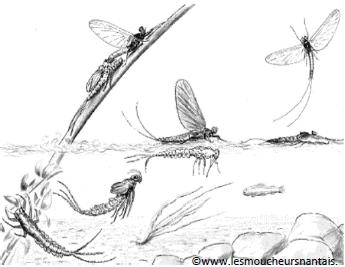 A la recherche des insectes aquatiques terrestres !